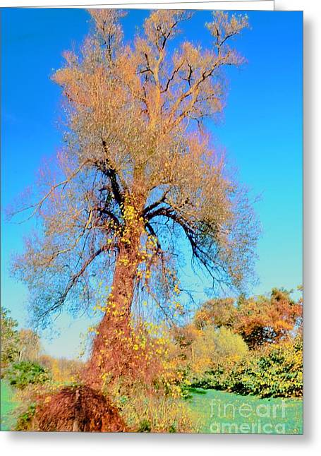 Up Rooted Tree Greeting Card by Kathleen Struckle