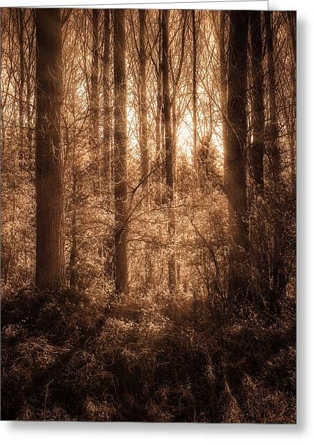 Brown Toned Art Greeting Cards - Light Trough The Forest Greeting Card by Wim Lanclus