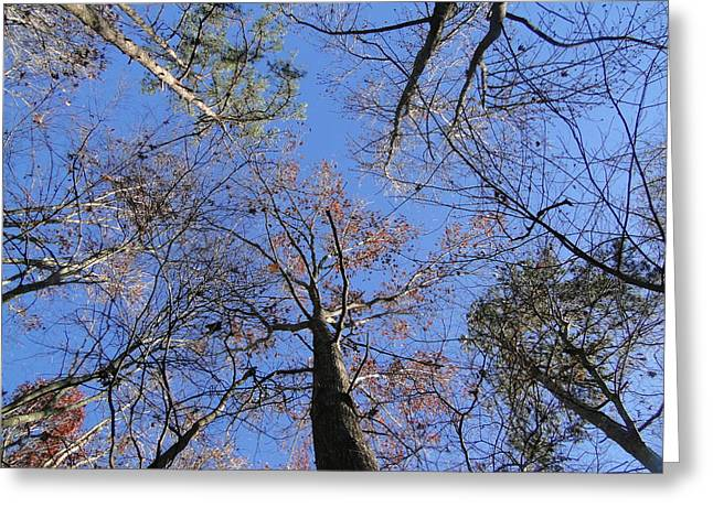 Cane Creek Greeting Cards - Up through the Forest Greeting Card by Cindy Croal