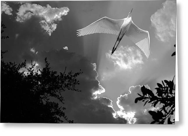 Fishing Creek Greeting Cards - Up Up And Away Bw Greeting Card by Roy Williams