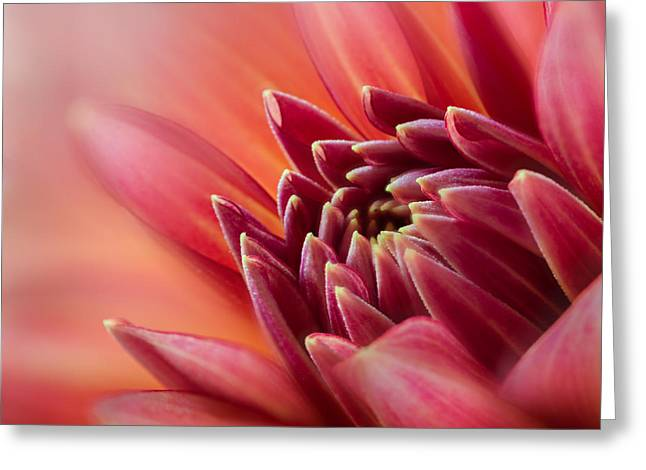 Flower Design Greeting Cards - Uplifting Greeting Card by Mary Jo Allen