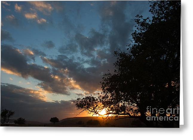 Sun Greeting Cards - Upper  Galilee sunset Greeting Card by Arik Baltinester