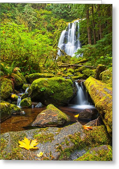 Douglas Fir Trees Greeting Cards - Upper Kentucky Falls - Autumn Greeting Card by Patricia  Davidson