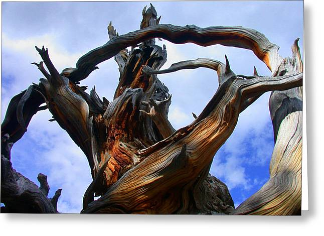 Uprooted Beauty Greeting Card by Shane Bechler