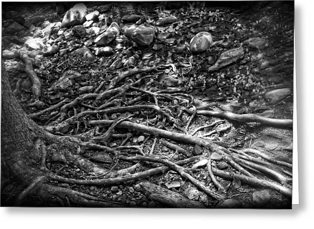 Tree Roots Greeting Cards - Uprooted Greeting Card by Rhonda Barrett