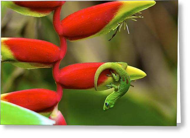 Gecko Print Greeting Cards - Upside Down Greeting Card by Jade Moon