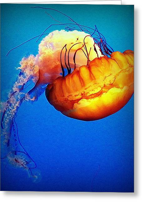 Upside Down Jelly Greeting Card by Faith Williams