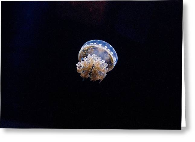 Medusa Greeting Cards - Upside Down Jellyfish 6 Greeting Card by Douglas Barnett