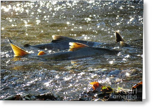 Upstream Greeting Card by Gayle Swigart