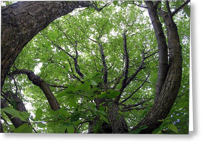 Go Pro Greeting Cards - Upward Greeting Card by J Pearson  Photos