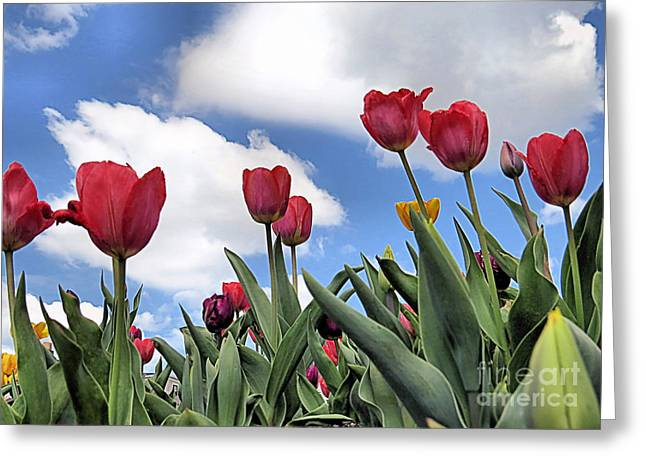 Blooms Greeting Cards - Upward Greeting Card by Janice Drew
