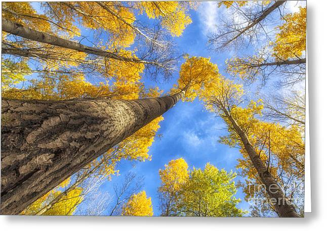 Artist Photographs Greeting Cards - Upward Greeting Card by Veikko Suikkanen