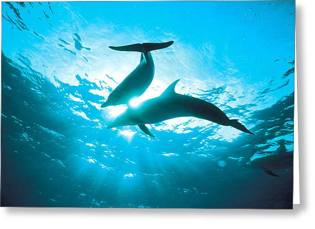 Ocean Photography Greeting Cards - Upward View Of Two Silhouetted Dolphins Greeting Card by Panoramic Images
