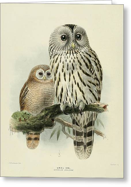Owl Greeting Cards - Ural Owl Greeting Card by J G Keulemans