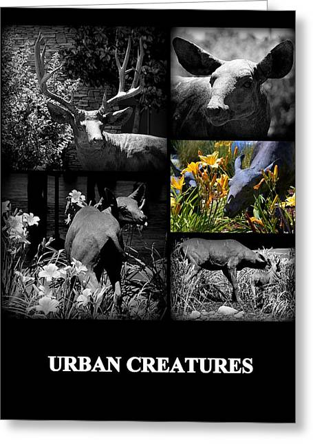 Urbam Greeting Cards - Urban Creatures Greeting Card by AJ  Schibig