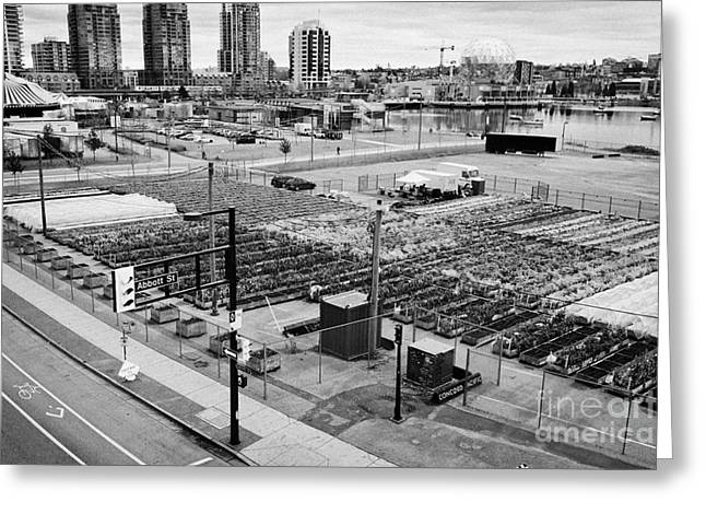 Concord Greeting Cards - urban farm on unused lot at concord pacific place at false creek Vancouver BC Canada Greeting Card by Joe Fox