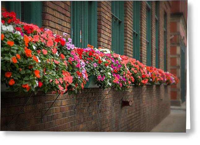 Flower Boxes Greeting Cards - Urban Flowers Greeting Card by Dale Kincaid