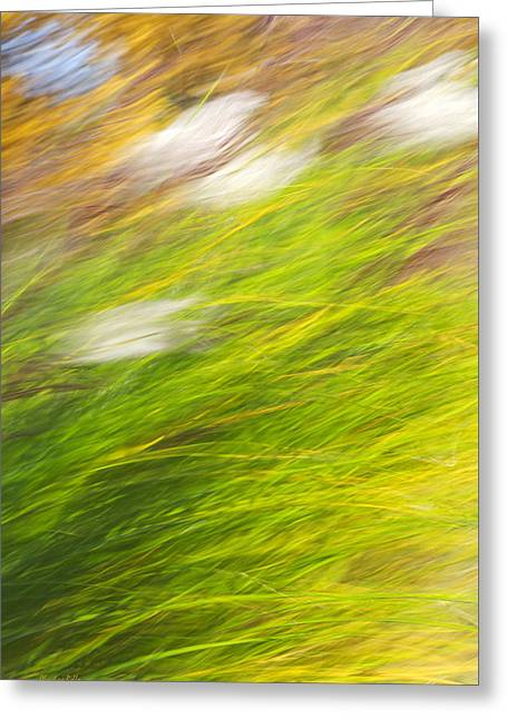 Urban Nature Fall Grass Abstract Greeting Card by Christina Rollo