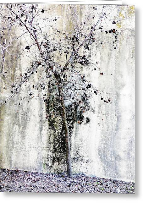 Twiggy Greeting Cards - Urban Oak Tree Greeting Card by Pamela Patch