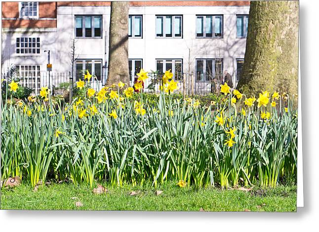 Beauty Greeting Cards - Urban spring Greeting Card by Tom Gowanlock