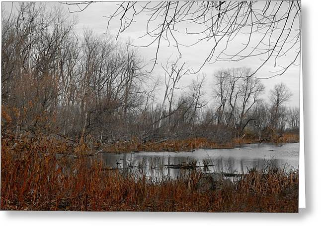 In-city Greeting Cards - Urban Swamp Greeting Card by Gothicolors Donna Snyder