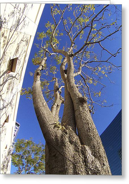 Geometric Digital Photographs Greeting Cards - Urban Trees No 1 Greeting Card by Ben and Raisa Gertsberg