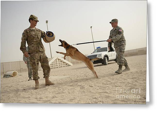 Working Dog Greeting Cards - U.s. Air Force Soldier Takes A Bite Greeting Card by Stocktrek Images