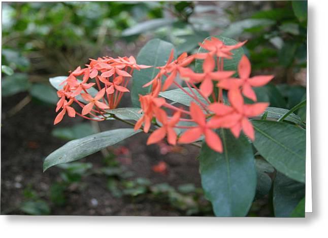 Us Botanic Garden - 121210 Greeting Card by DC Photographer