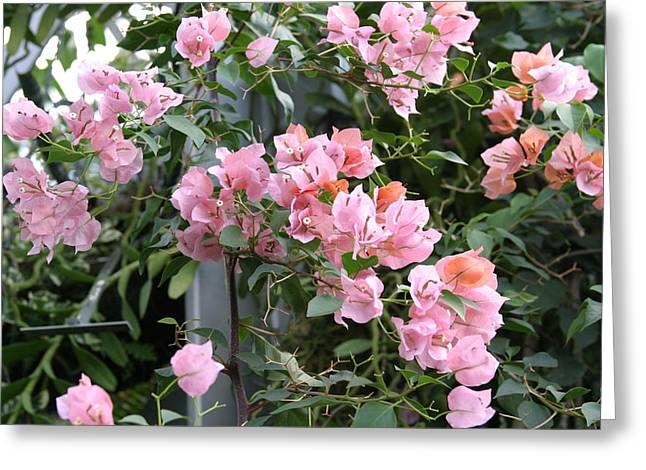 House Greeting Cards - US Botanic Garden - 121214 Greeting Card by DC Photographer