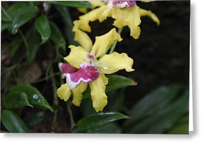 State Greeting Cards - US Botanic Garden - 121249 Greeting Card by DC Photographer