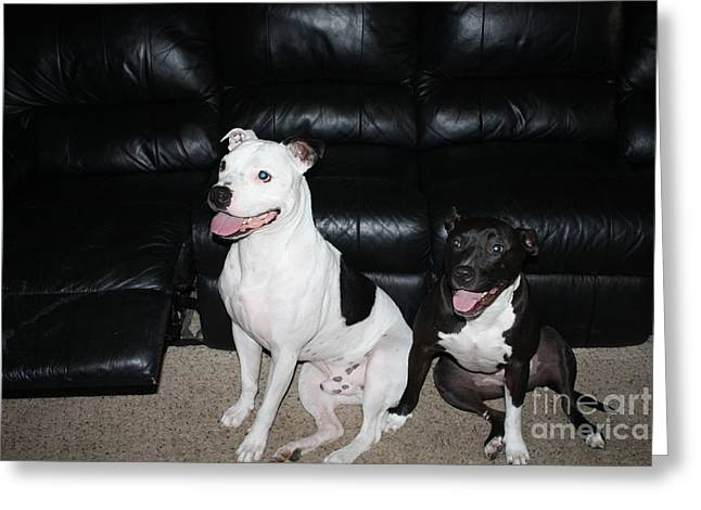 Pit Bull Owner Greeting Cards - US Marines Dogs at ATTENTION Greeting Card by John Telfer