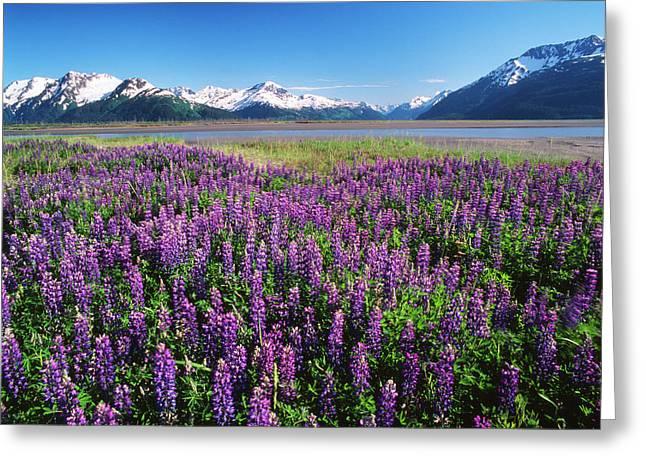 Usa, Alaska, Kenai National Wildlife Greeting Card by Adam Jones