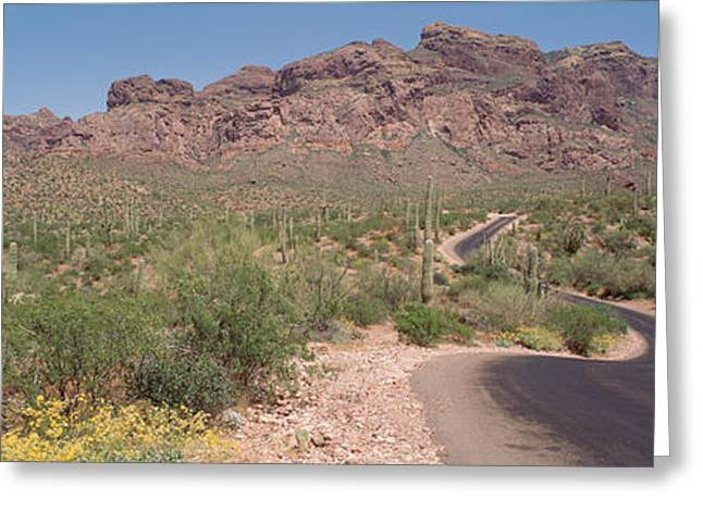 Drawn Landscape Greeting Cards - Usa, Arizona, Dreamy Draw Park, Cactus Greeting Card by Panoramic Images