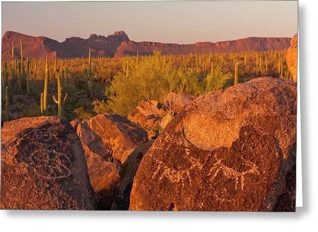 Usa, Arizona, Pima County, Saguaro Greeting Card by Jaynes Gallery