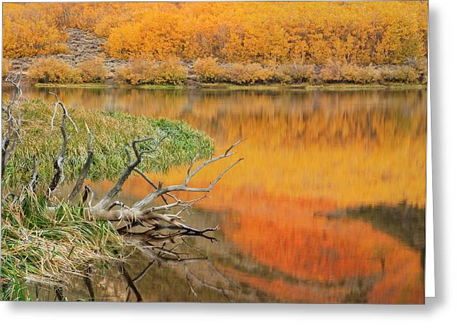 Usa, California Autumn Colors Reflect Greeting Card by Jaynes Gallery