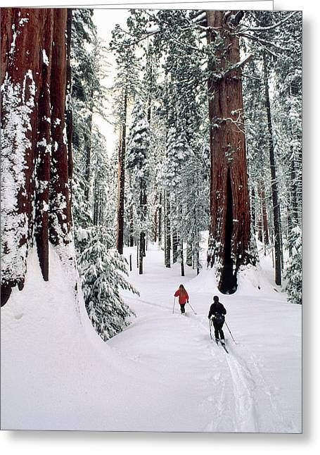 Usa, California, Cross Country Skiing Greeting Card by Gerry Reynolds