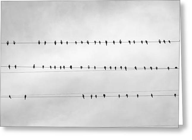 Overcast Day Greeting Cards - Usa, California, Flock Of Birds Sitting Greeting Card by Panoramic Images