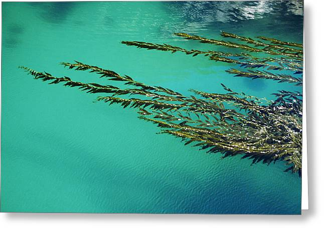 Ocean Art Photography Greeting Cards - Usa, California, Seaweed Floating Greeting Card by Larry Dale Gordon