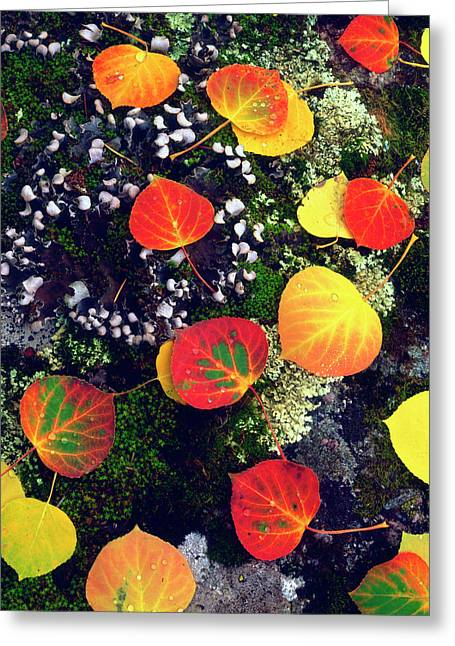 Usa, Colorado, Aspen Leaves On A Lichen Greeting Card by Jaynes Gallery