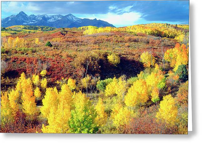 Usa, Colorado, Rocky Mountains, Autumn Greeting Card by Jaynes Gallery