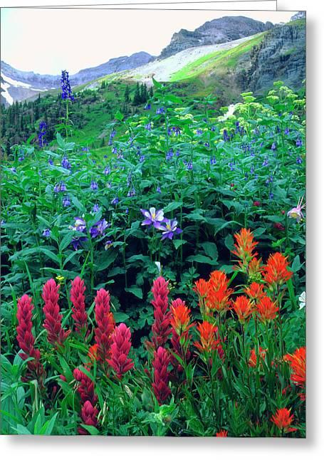 Usa, Colorado, Wildflowers In Yankee Greeting Card by Jaynes Gallery