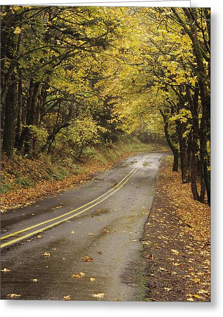 Yellow Line Greeting Cards - Usa, Columbia River Gorge National Greeting Card by Greg Vaughn