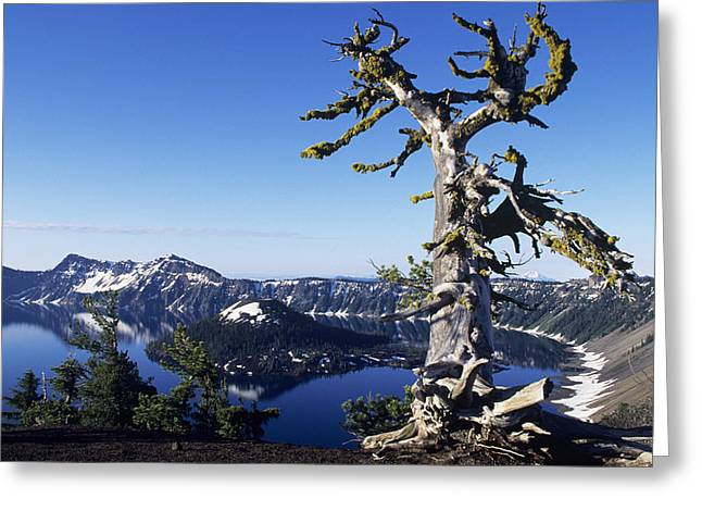 Crater Lake View Greeting Cards - Usa, Crater Lake National Park Oregon Greeting Card by Greg Vaughn