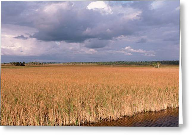 Florida Landscape Photography Greeting Cards - Usa, Florida, Big Cypress National Greeting Card by Panoramic Images