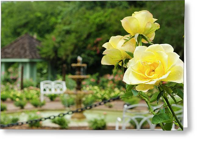 Usa, Florida Harry P Leu Gardens Greeting Card by Michael Defreitas