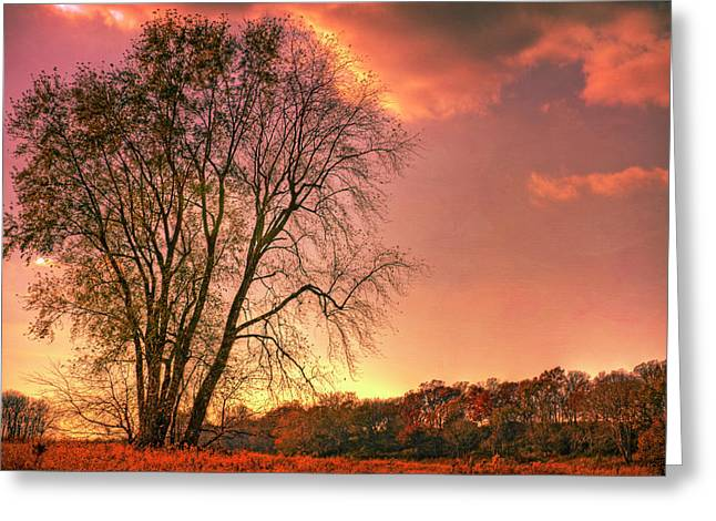 Usa, Indiana Giant Tree In Prophetstown Greeting Card by Rona Schwarz