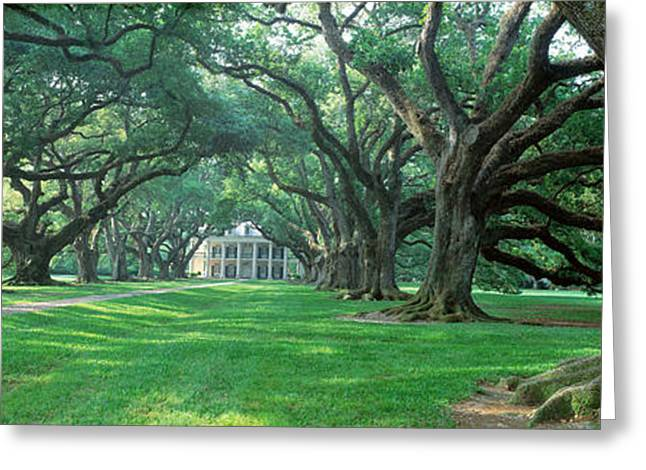 Tree Lines Greeting Cards - Usa, Louisiana, New Orleans, Oak Alley Greeting Card by Panoramic Images