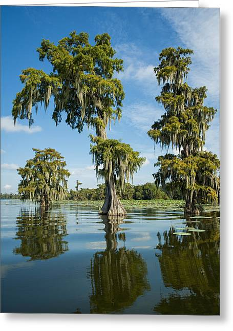 Trees Reflecting In Water Greeting Cards - Usa, Louisiana, Swamp Landscape Breaux Greeting Card by Dosfotos