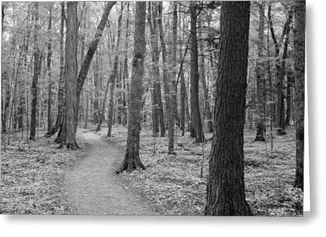 White River Scene Greeting Cards - Usa, Michigan, Black River National Greeting Card by Panoramic Images