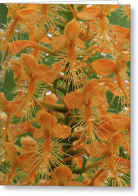 Usa, Michigan, Close-up Of Yellow Greeting Card by Jaynes Gallery